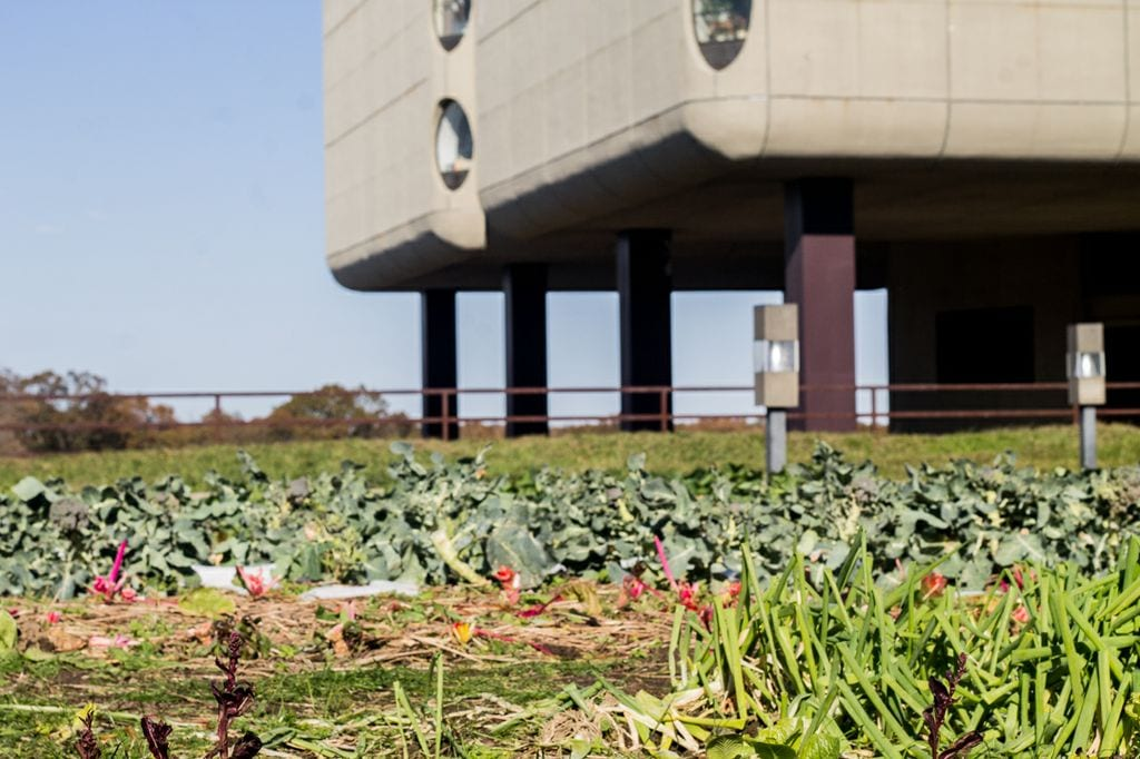 The School of Medicine grows produce on top of the Health Sciences building.
