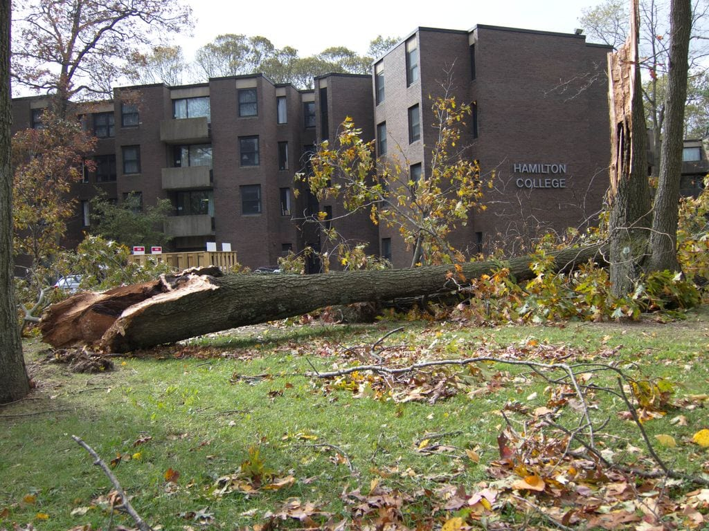 Hurricane Sandy knocked down multiple trees on Stony Brook University's campus at the end of October.