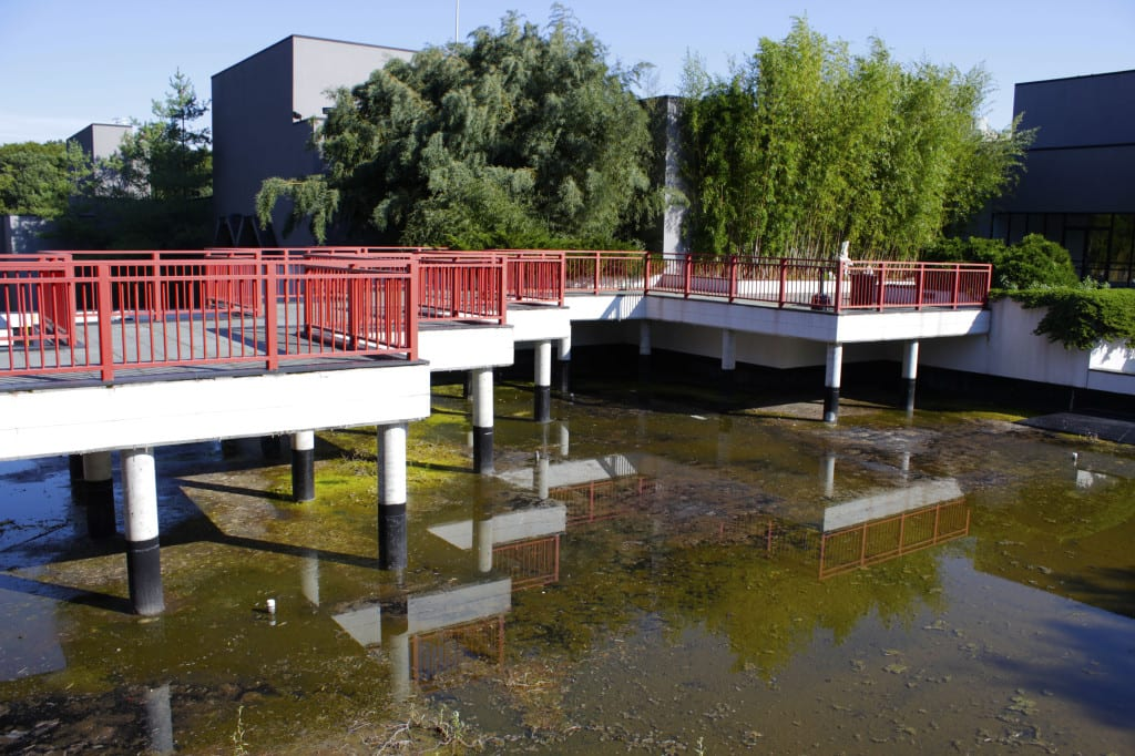 Wang Center Garden Pond In Need Of Repairs The Statesman
